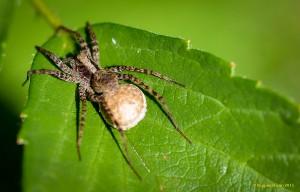 A Big-ass spider :D