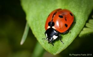 Macro Lady Bug :D